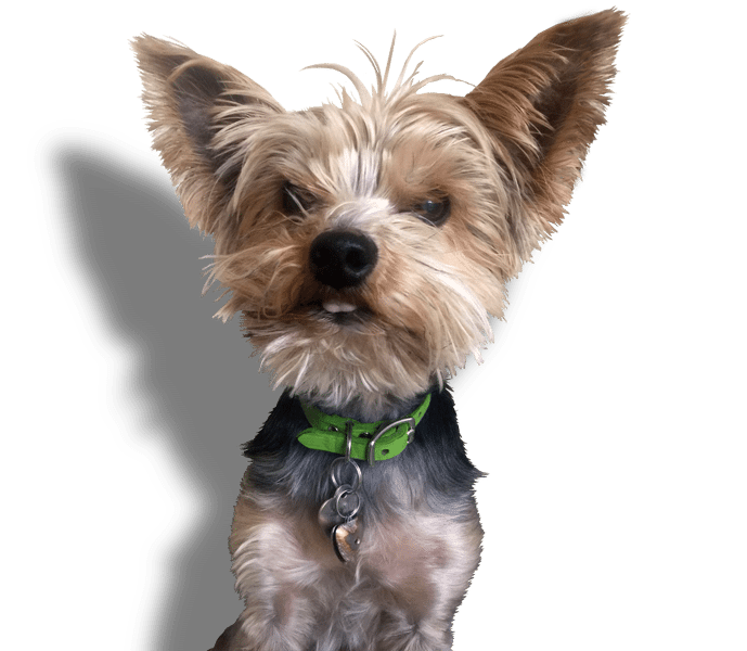 Maids2000 - Eco-Clean Products - Pet Friendly - Peanut Image